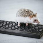 【WordPress】テキストエディタによく使うタグをボタンに追加できるプラグイン