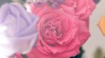 CSSを使って背景色・背景画像を設定する方法